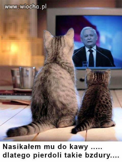 Koty prezesa