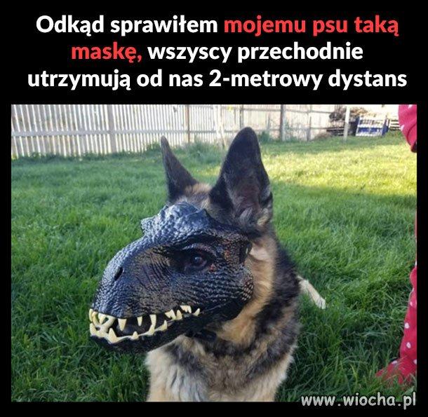 Moj-pies-tez-nosi-maseczke
