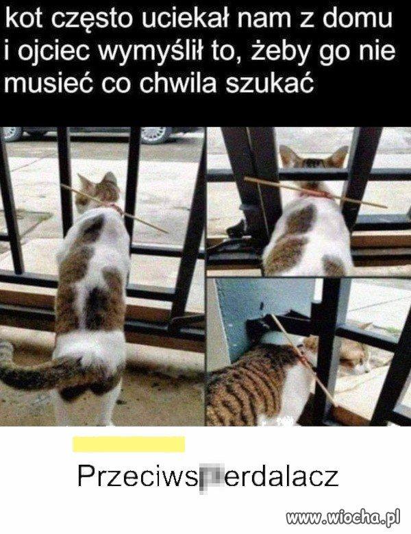 Sposob-na-krnabrnego-kota