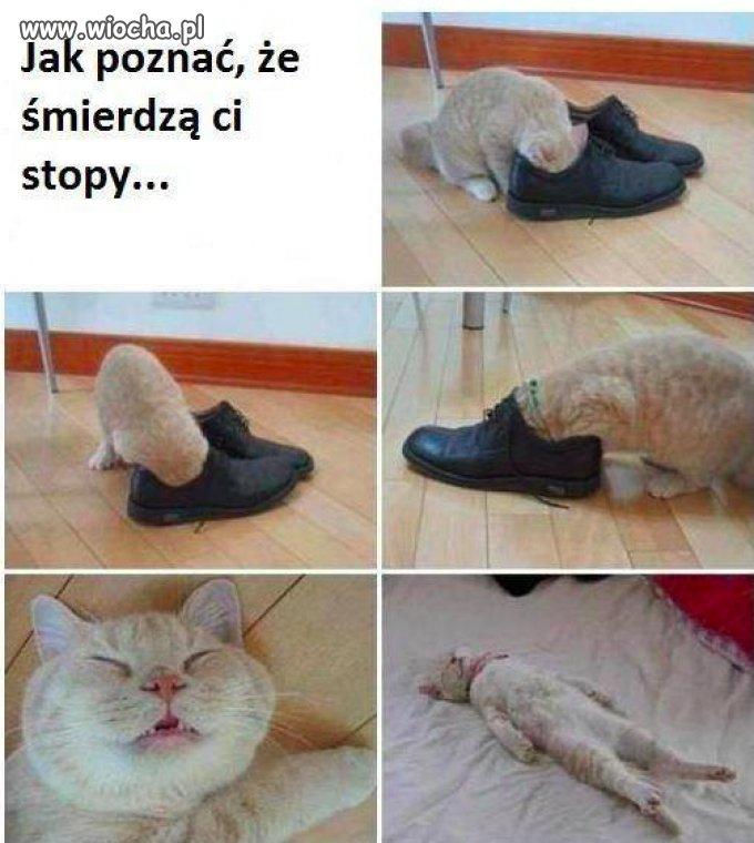 Kup-sobie-kotka-to-sie-dowiesz