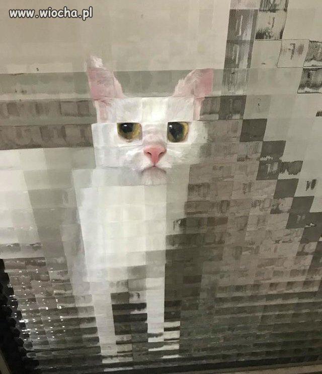 Osmiobitowy-kot