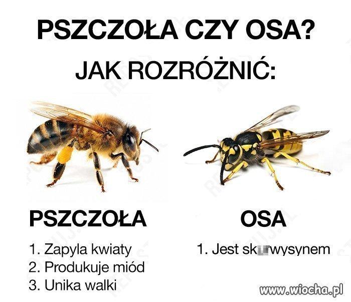 Poradnik-mlodego-wiochowicza