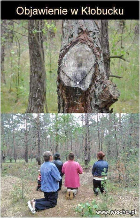 Mozna-sie-modlic-bezpiecznie-w-przewiewnym-lesie