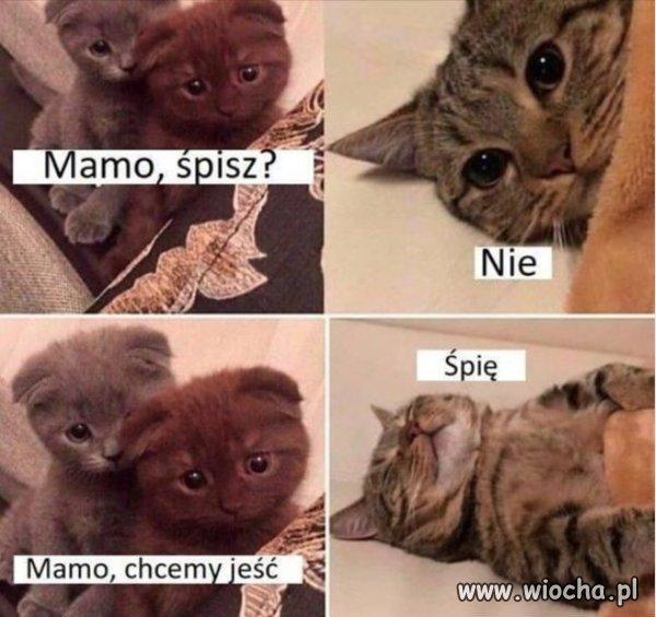 Mamo-spisz