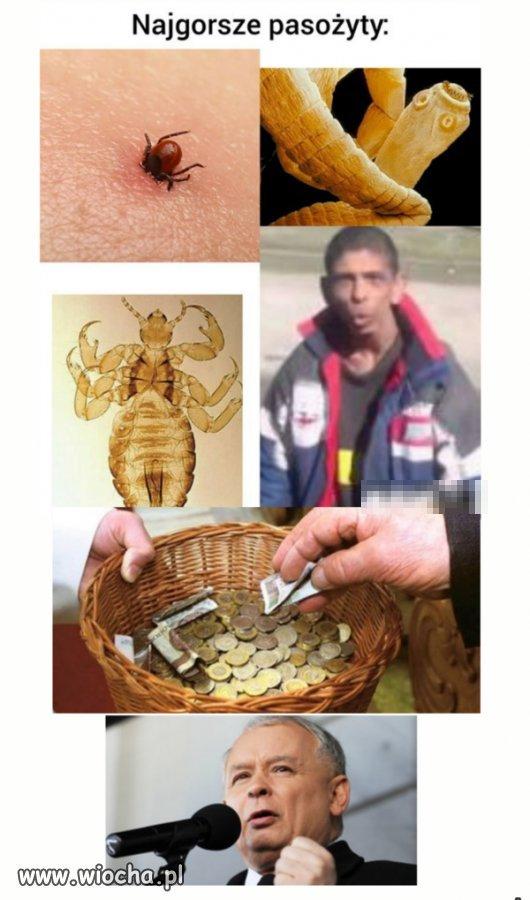 Najgorsze-pasozyty