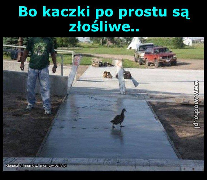 Bo-kaczki-po-prostu-sa-zlosliwe