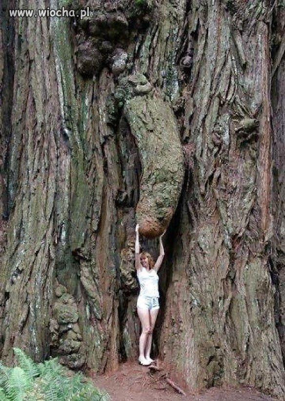 Chwyc-drzewo