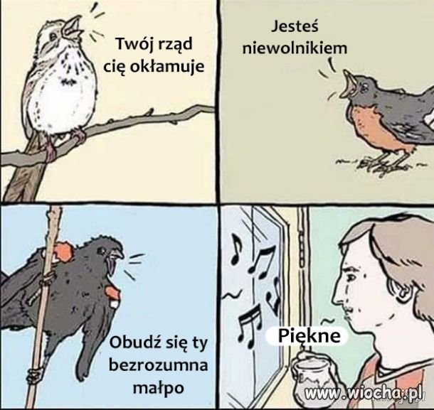 Spiew-ptakow