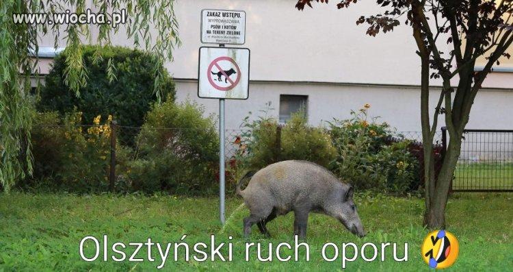 Olsztynski-ruch-oporu