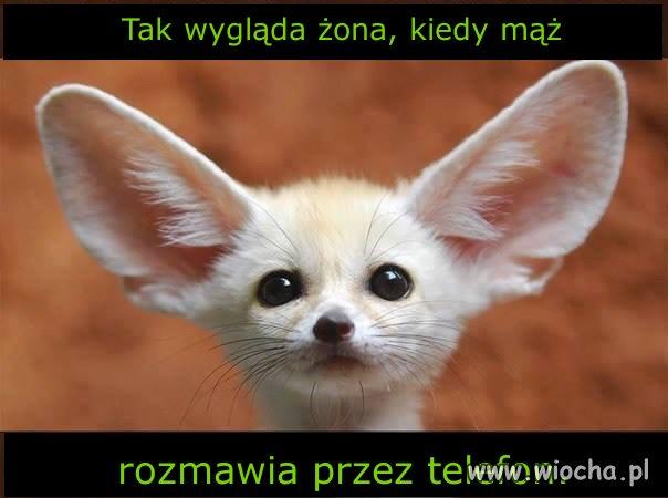 Wyglad-zony