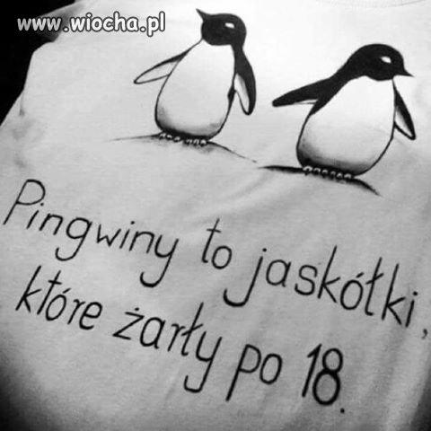 Zarcie-po-18