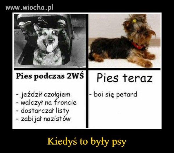 Kiedys-to-byly-psy