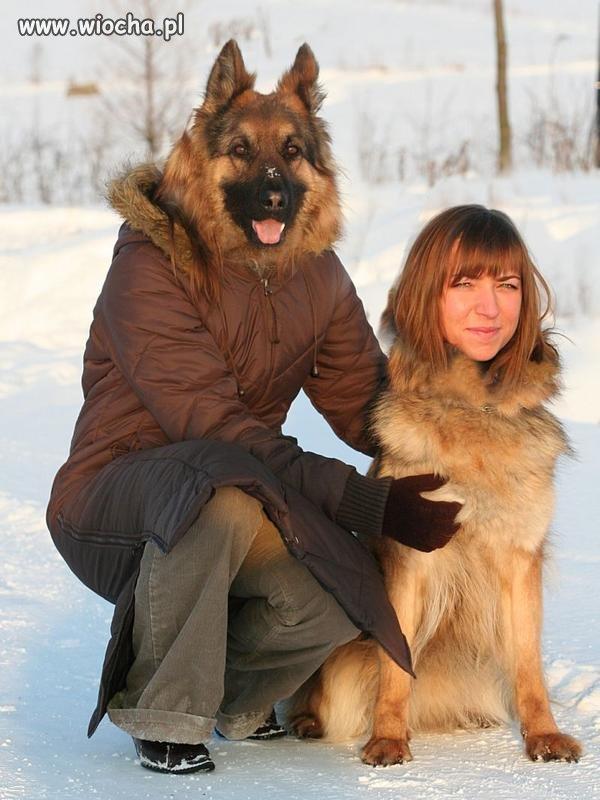 Pies-z-pania
