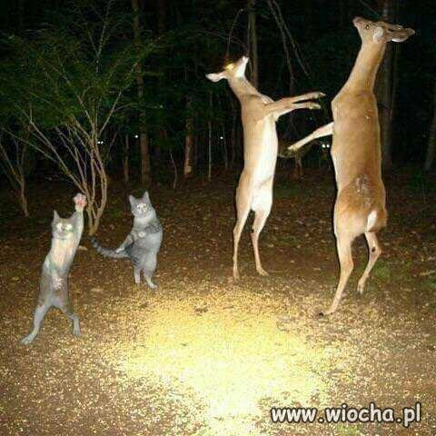 Co-robia-zwierzeta-w-lesie