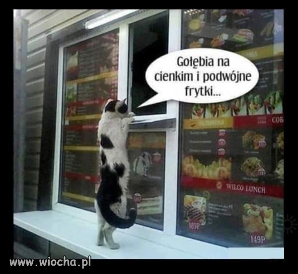 Kot zamawia