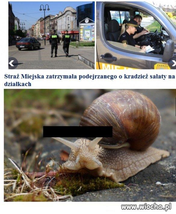 Straz-Miejska