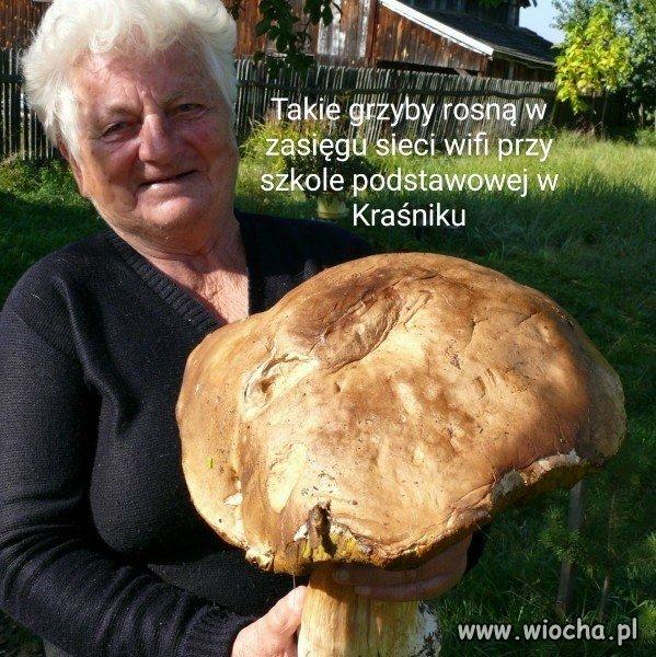 Grzyby-w-Krasniku