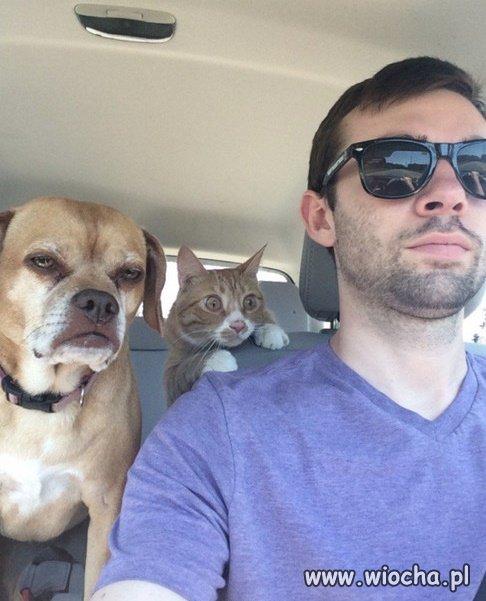 Pies-juz-wie-ale-kot-jedzie-pierwszy-raz