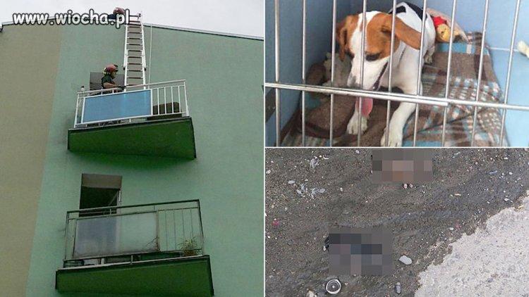Suka-oszczenila-sie-na-balkonie