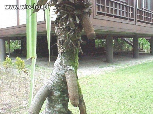 A-jednak-rosna-na-drzewach