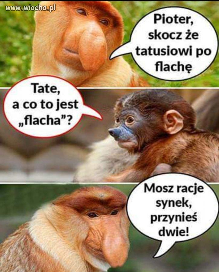 Madrosc-zyciowa