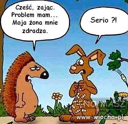 Czesc-zajac