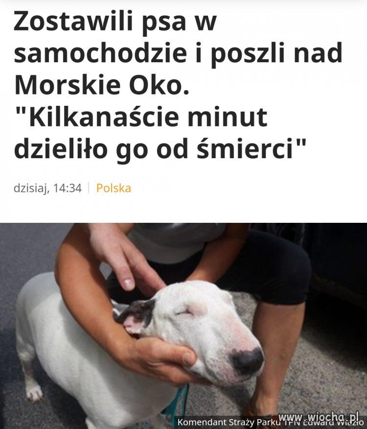 Zostawili psa w aucie na 6 godzin przy 31stopniach