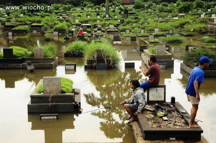A-tymczasem-na-cmentarzu-debilizm-siegnal-zenitu