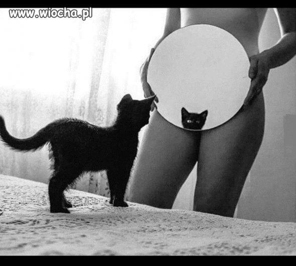 Bardzo-mily-kotek