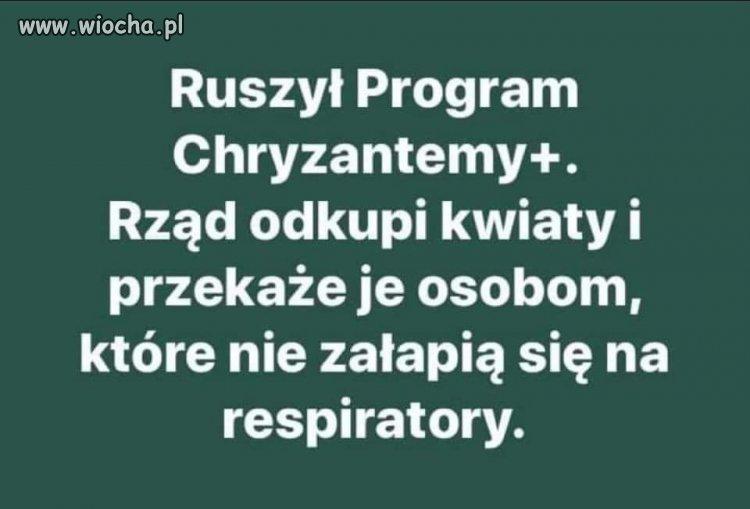 Chryzantemy???