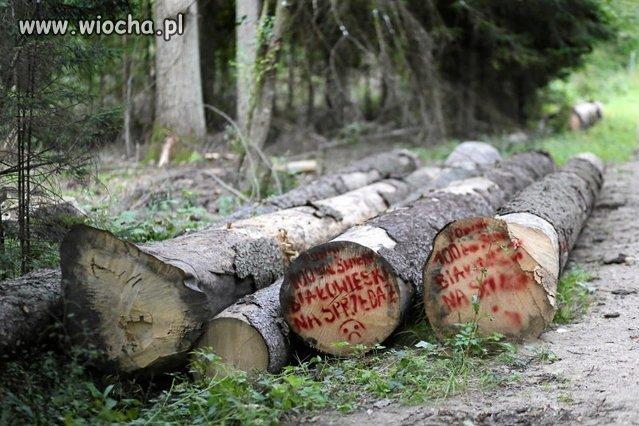 Znow-pisowskie-odpady-tna-puszcze-bialowieska