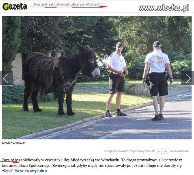 Gazeta-Wroclawska