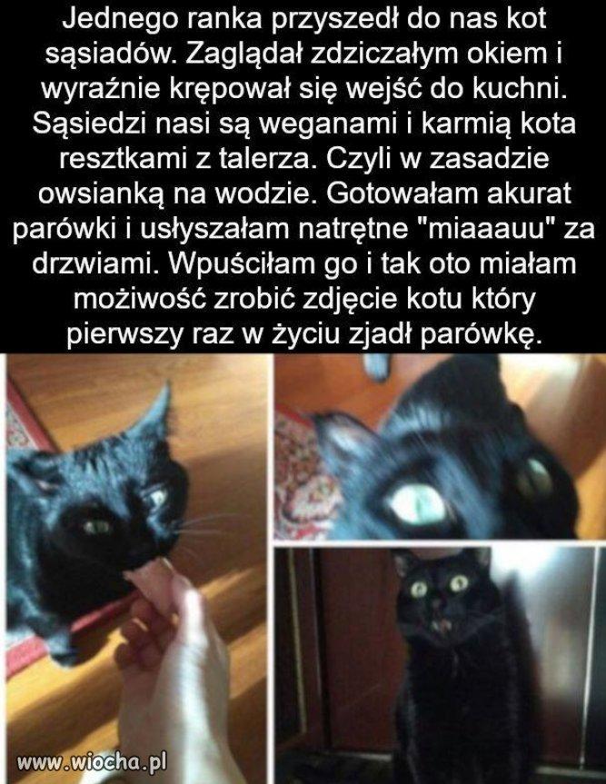 Kitku-koteczek-kitkunio-weganow