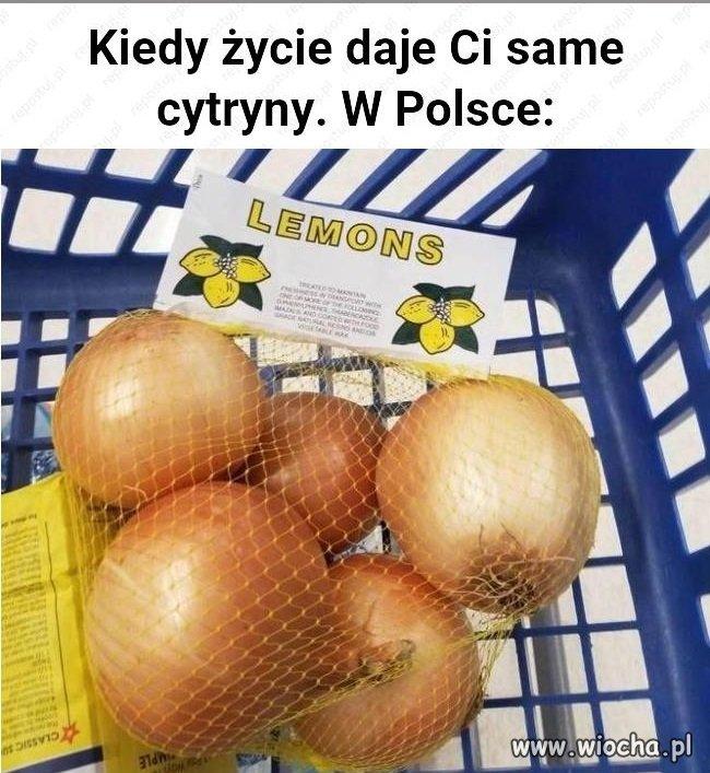 Cytryny-na-miare-Polski