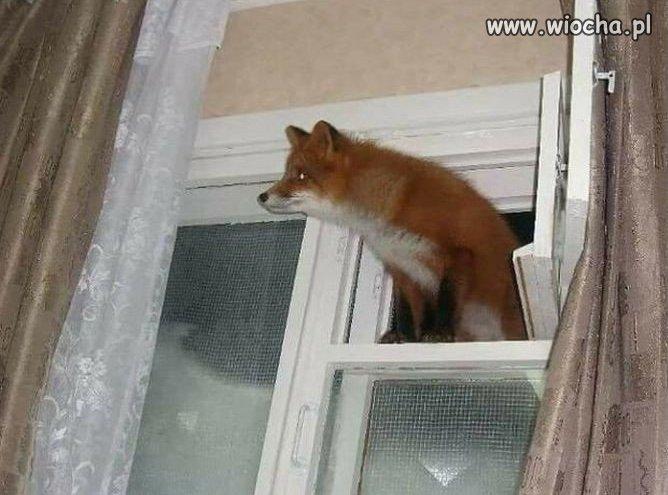 Firefox-znalazl-dziure-w-Windowsie