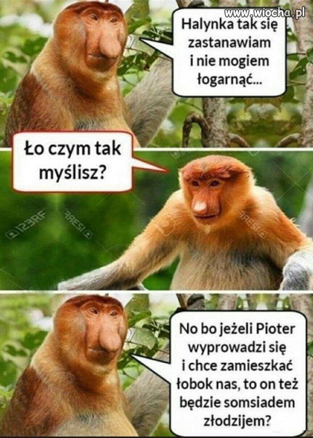 Przemyslenia-Janusza