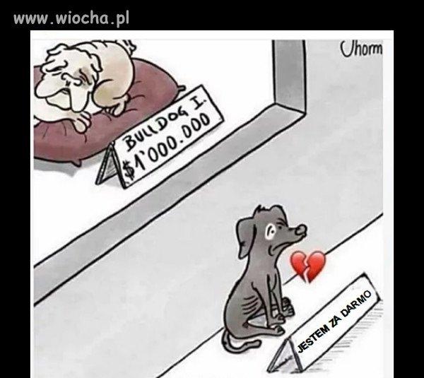 Pamietaj---adoptuj-nie-kupuj
