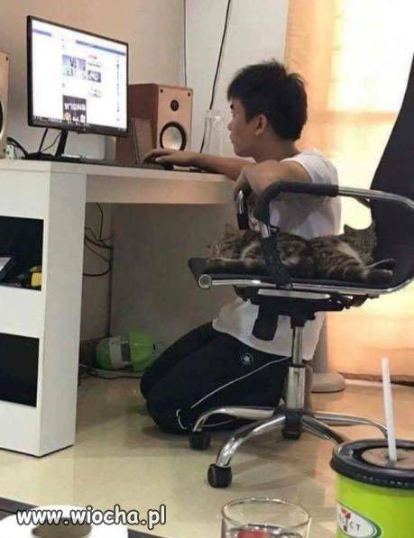 Logika-wlascicieli-kotow