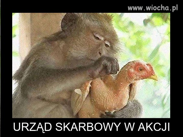 Skarbowka