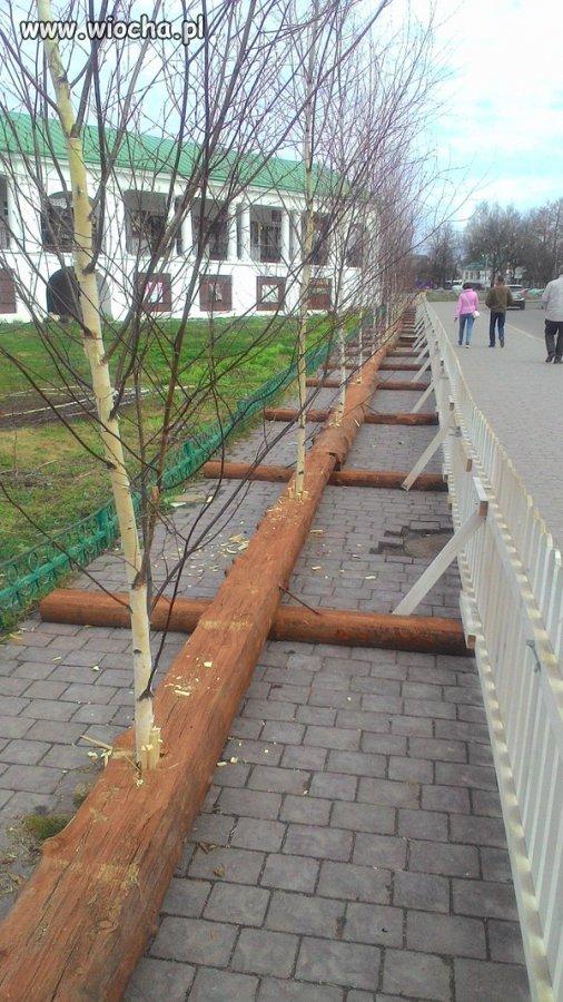 Szpaler-drzew-wzdluz-alei