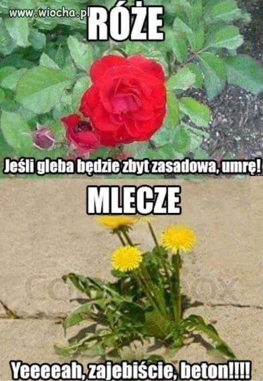 Kwiatek-ktory-nie-wybrzydza