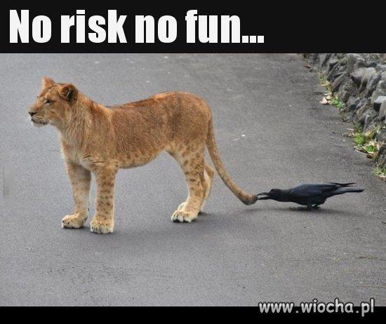 No risk...