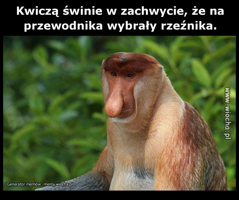 Kwicza-swinie-w-zachwycie-ze-na-przewodnika
