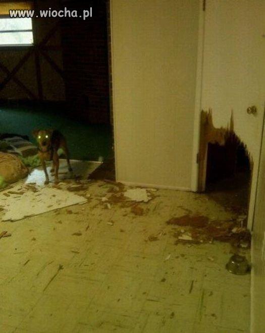 Mala-dziure-piesek-w-drzwiach-zrobil