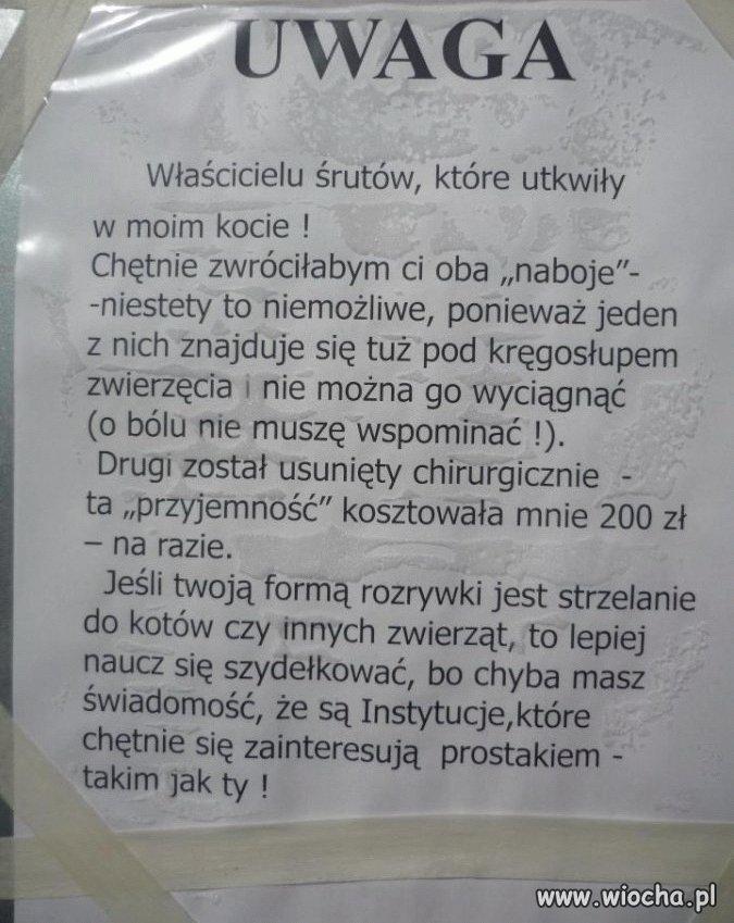 Wiadomosc
