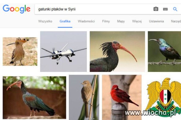 Gatunki-ptakow-w-Syrii