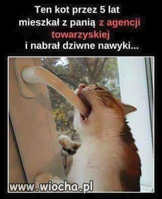 Tak-samo-maja-koty