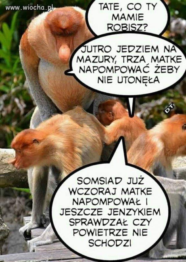 Pompuj Janusz