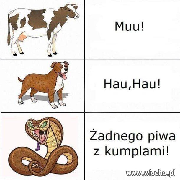 Jezyk-zwierzat