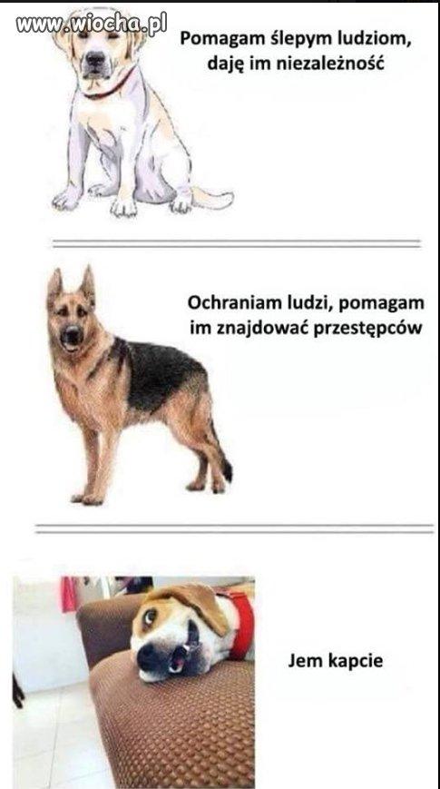 rasy-pieselow